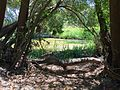Kororoit Creek, Sunshine - riverbank.jpg