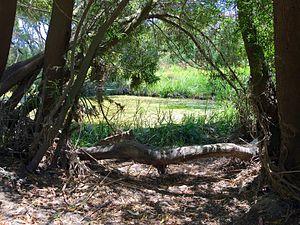 Kororoit Creek - Image: Kororoit Creek, Sunshine riverbank