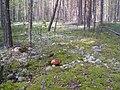 Kortkerossky District, Komi Republic, Russia - panoramio (3).jpg