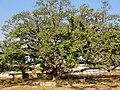 Kosli, Haryana 123302, India - panoramio (10).jpg