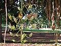 Kp Sausage tree IMG 8816 (2214366684).jpg