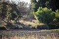 Kruger National Park, South Africa (36735549301).jpg