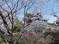 Kumamoto Castle 31 March 2011 04.jpg