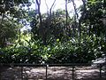 Lagos Parque del Este 003.JPG