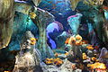 Laika ac Sunshine City Aquarium (7898410476).jpg