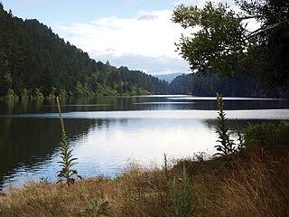 Lake Matahina Lake in Bay of Plenty region, New Zealand
