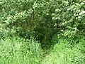 Landschaftsschutzgebiet Horstmanns Holz Melle -Waldrand- Datei 2.jpg