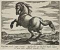 Landschap met paard uit Polen. NL-HlmNHA 1477 53011512.JPG