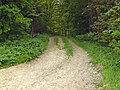 Lane through woods - geograph.org.uk - 430132.jpg