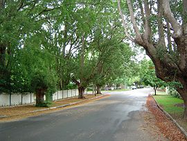 Laurel Avenue Chelmer Queensland.jpg