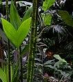Leaf, Moss, Blossom (24064672099).jpg