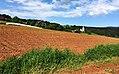 Lehmerde am Feld in Deinsberg, Gemeinde Guttaring, Bezirk Sankt Veit an der Glan, Kärnten.jpg