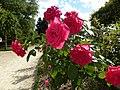 Les roses du thabor - panoramio (2).jpg
