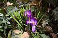 Leuchtender Frühling (31221075).jpeg