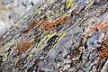 Lichens on Sierra Nevada Mountains - Flickr - daveynin.jpg