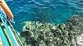 Limite Barriera Corallina e il Mare - panoramio.jpg