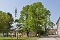 Linden am Hauptplatz von Großschönau 2014-05 01 NÖ-Naturdenkmal GD-101.jpg