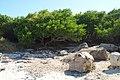 Llanos Costa, Cabo Rojo, Puerto Rico - panoramio (3).jpg