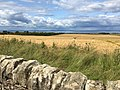 Looking across ripening corn fields in East Lothian towards Firth of Forth and Fife (geograph 6209178).jpg