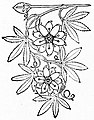 Louis Antoine de Bougainville - Voyage de Bougainville autour du monde (années 1766, 1767, 1768 et 1769), raconté par lui-même, 1889 (p20 crop).jpg