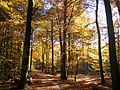 Lueneburger-Tiergarten.JPG