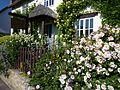 Lulworth - Rosegarden.jpg