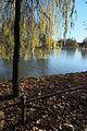 München Englischer Garten Kleinhesseloher See 425.jpg