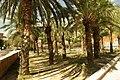 MADRID A.V.U. JARDIN-PARQUE DE PEÑUELAS PALMERAS - panoramio - Concepcion AMAT ORTA… (3).jpg