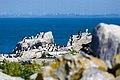 Machias Seal Island (28048709105).jpg