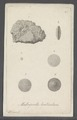 Madreporites lenticularis - - Print - Iconographia Zoologica - Special Collections University of Amsterdam - UBAINV0274 113 07 0012.tif