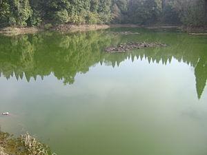 Mai Pokhari - Mai Pokhari wetland