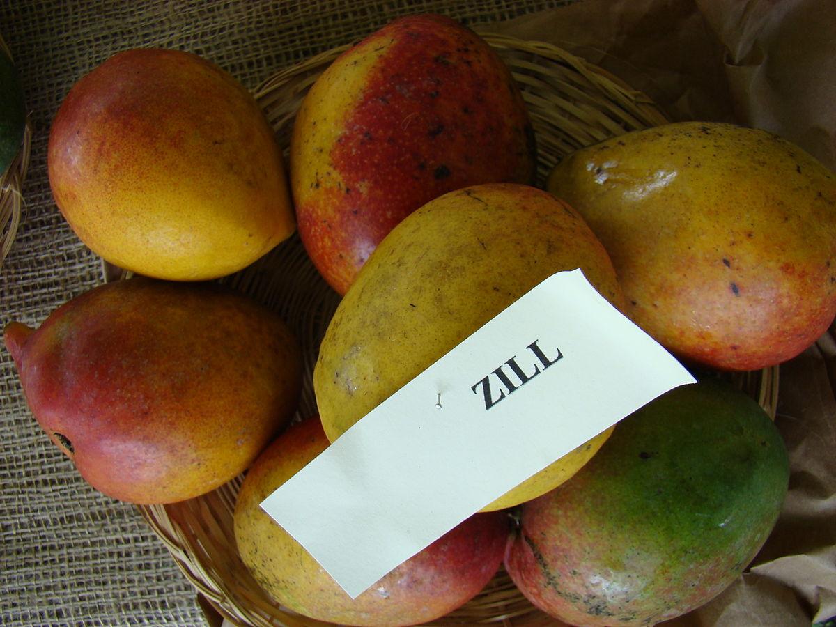 Zill (mango) - Wikipedia