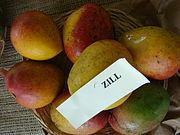 Mango Zill Asit fs8.jpg