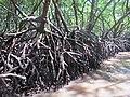 Mangrooves.jpg