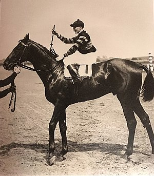 Man o' War - Man o' War after winning the Belmont Stakes