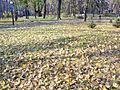 Mariinsky park in the autumn. Fallen leaves(5).jpg