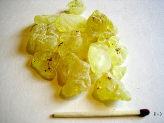 Pistacia lentiscus - Mastic resin