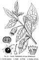 Medicinal Herbs Poisonous Plants-136-80.png