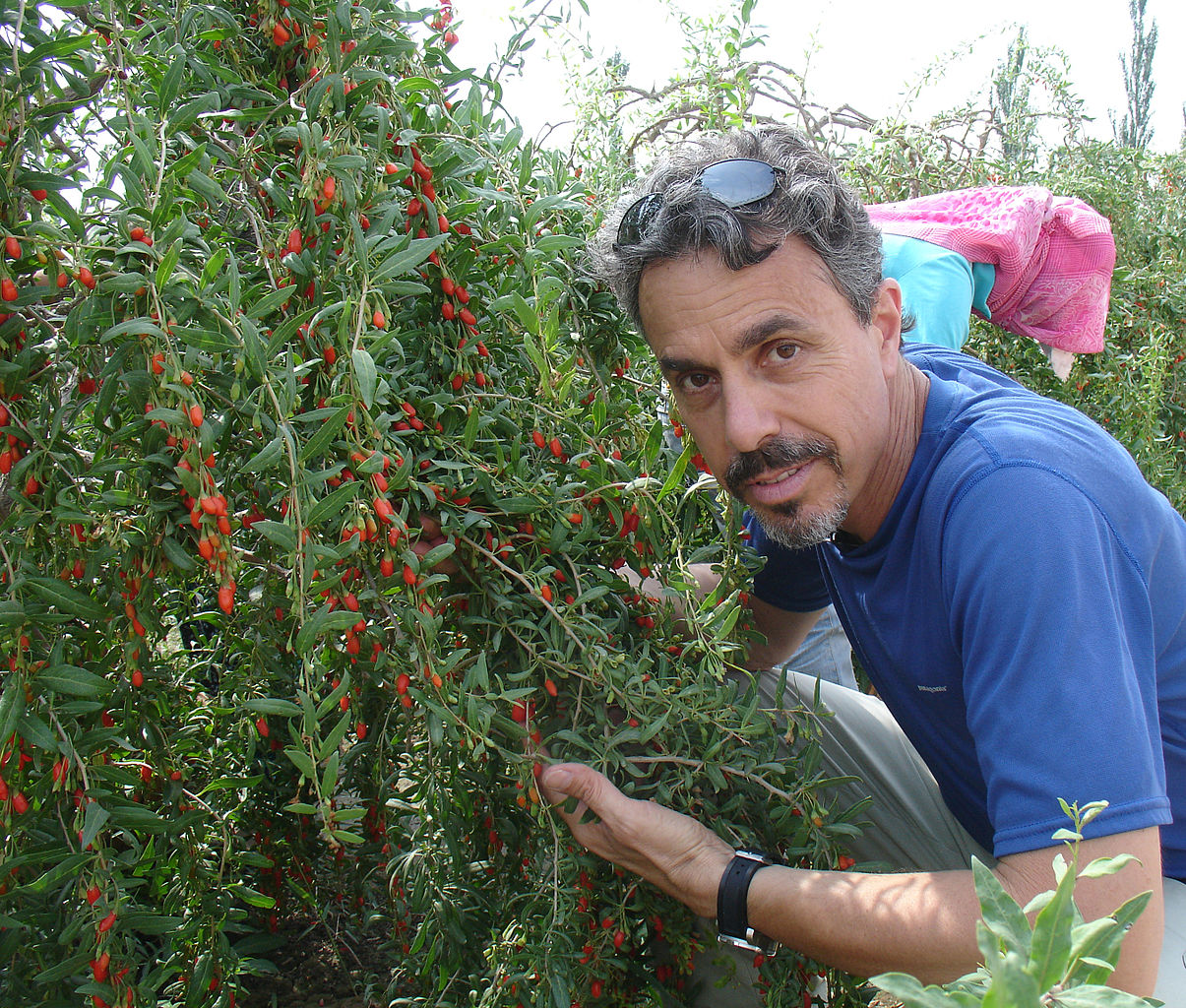 File:Medicine Hunter Chris Kilham with Goji Berry in China ...