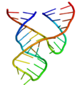 Minimal hammerhead ribozyme structure.png