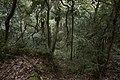 Minnamurra Rainforest - panoramio (27).jpg