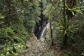 Minnamurra Rainforest - panoramio (32).jpg