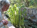 Mme L'Hardy-Halos au coeur du jardin L'Hardy-Denonain.jpg
