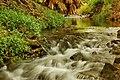 Moanalua Stream at Moanalua Gardens - panoramio.jpg