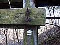 Monroe County - Victor Pike - abandoned railway - trestle - Osmose tag - P1120780.JPG