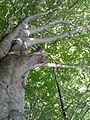 Montseny Fageda de Santa Fe 01.jpg
