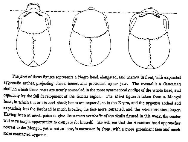 Morton drawing
