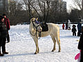 Moscow, Goliyanovo, Pond, Winter 07.jpg