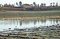 Motray in flood - geograph.org.uk - 663497.jpg