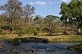 Moyar River Camp Elephant Bath Mudumalai Mar21 A7C 00333.jpg